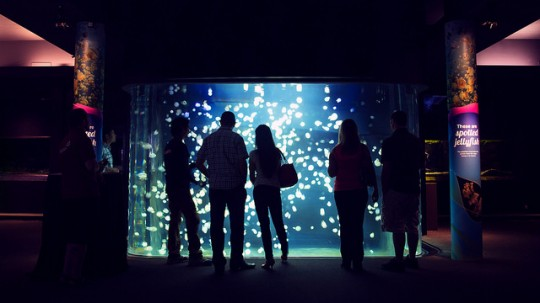 Vancouver Aquarium After Hours